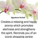 signature-orchid